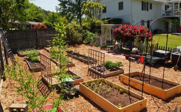 Backyard garden ideas to