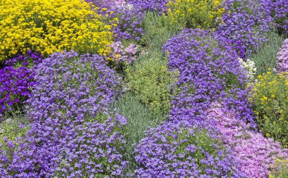 Best Ground Cover Plants for