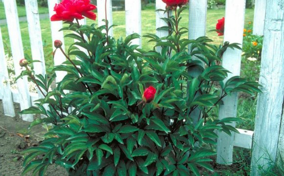 Low-Maintenance Plants for