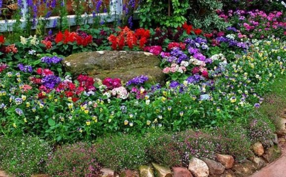 Stunning Backyard Flower