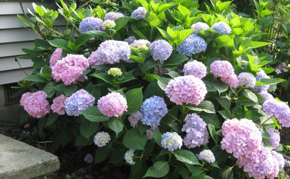 Top Curb Appeal Plants for