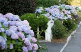 11 Creative Ideas to Spruce Up Small Front Yards