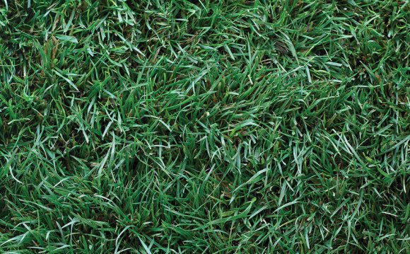 Which is the best Artificial Grass?