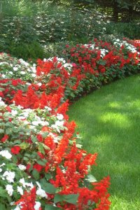 Curved Plant Bed, Red Salvia, White Impatiens Johnsen Landscapes & Pools Mount Kisco, NY