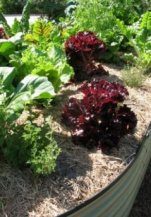 Effective use of mulch in a raised garden bed