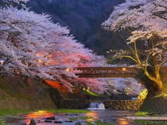 Japanese garden plants blossoming cherry trees japanese garden design ideas