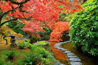 Japanese garden plants japanese garden design ideas maple tree