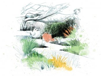 Ornamental Grasses Drawing David Despau ,
