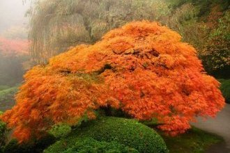 plants for a japanese style garden maple trees most beautiful japanese gardens