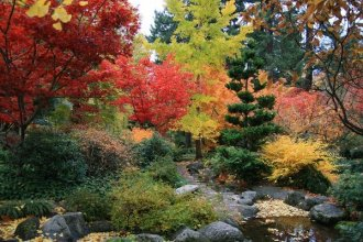 plants for a japanese style garden awesome japanese gardens