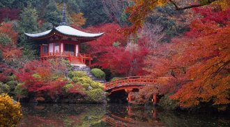 plants for japanese garden japanese garden autumn leaf beautiful bridge japanese garden bridge