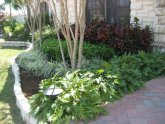 Southern Landscaping plants