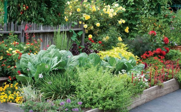 Edible Landscaping Design plans